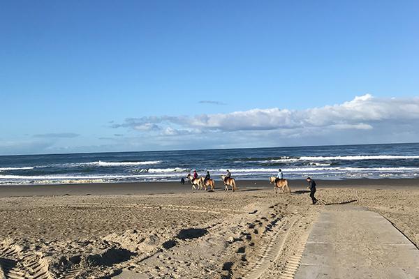 Das Ferienhaus Texel | Strand mit Pferden
